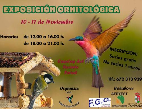 Campanario volverá a disfrutar de los pájaros con la II Exposición Ornitológica