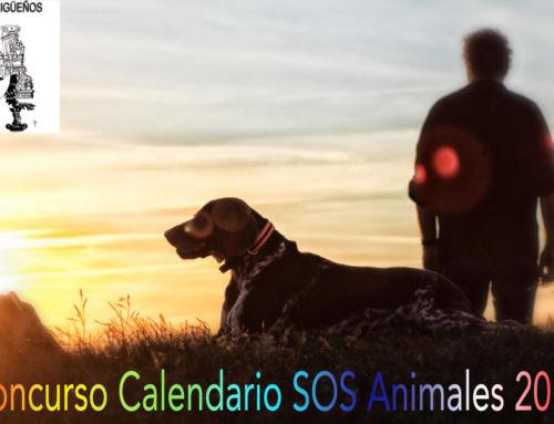 SOS Animales de Campanario busca fotografías para su nuevo calendario