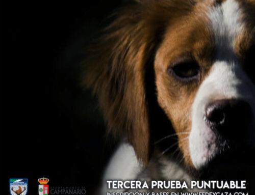 Campanario acoge el Campeonato de Extremadura de San Huberto 2019