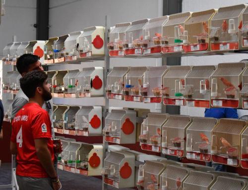 La III Exposición Ornitológica de Campanario reúne cerca de 200 aves