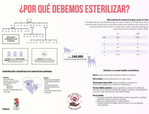 Campaña de esterilización de animales en Campanario